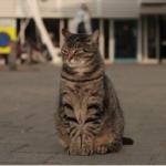 Wat de kat ziet