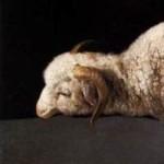 Zurbaran agnus-dei hoofd